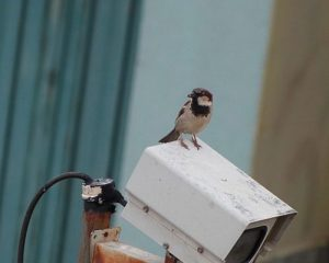vigilancia-imperio-ramonet-500x401